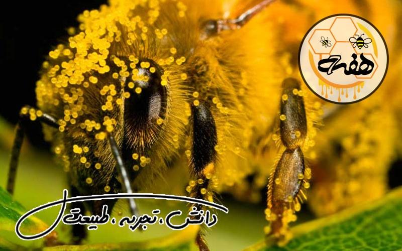 فروش گرده گل عسل
